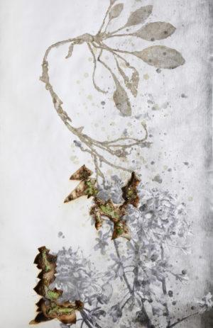 les plantes tinctoriales, interprétées par le jeune artiste japonais Akira Inumaru