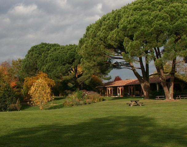 arboretum Coursiana, les pins parasols